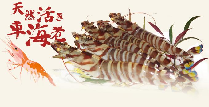 天然活き車海老 | (有)上野水産